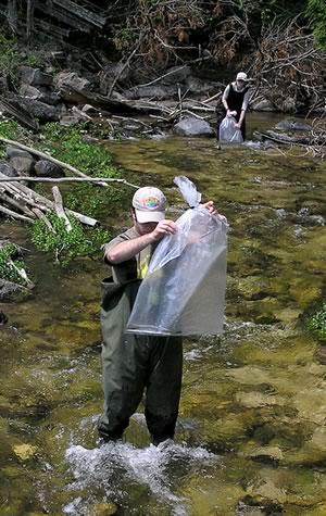 Fish Monitoring